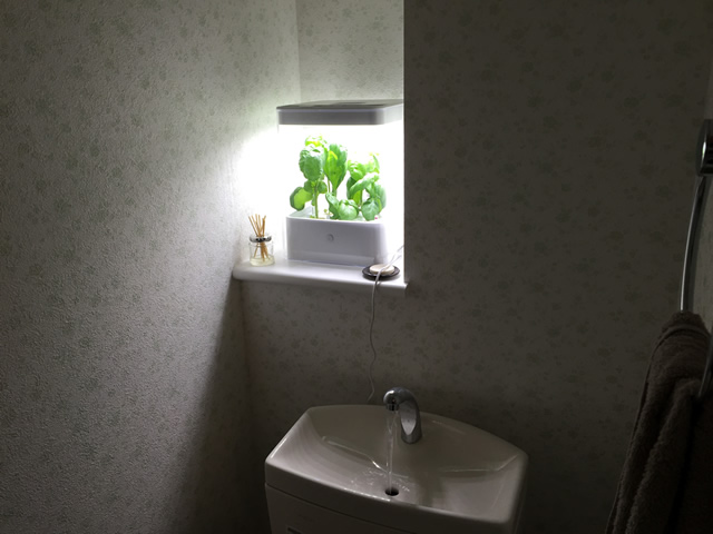 室内で簡単水耕栽培ができるGreen Farm Cubeを購入した!